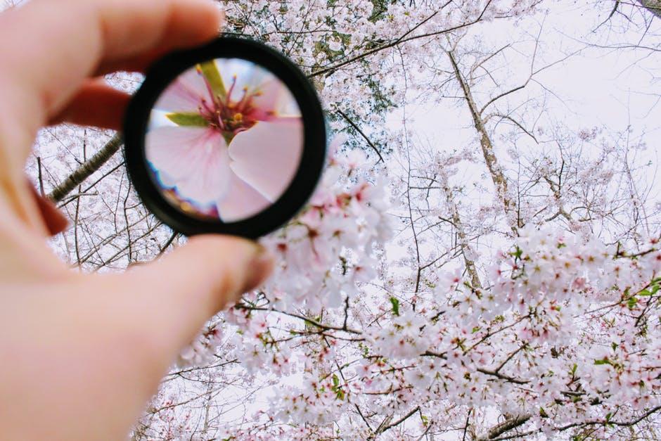 Imagen miniatura